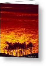 Palms And Reflections Greeting Card
