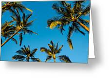 Palms And Sky Greeting Card