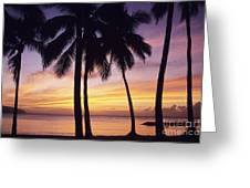 Palms And Sunset Sky Greeting Card