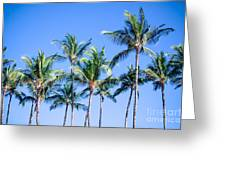 Palms In Living Harmony Greeting Card