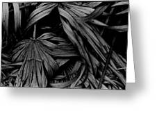 Palms Greeting Card