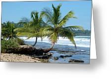 Palms On Ocean Greeting Card