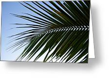 Palms To The Sky Greeting Card