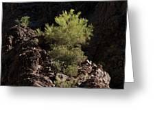 Palo Verde Spotlight-sq Greeting Card