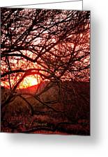 Palo Verde Sunset Greeting Card