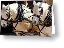 Palomino Horses Greeting Card