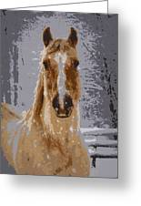 Palomino In The Snow Greeting Card