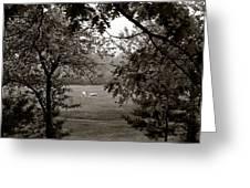 Palominos Framed In Oak Greeting Card