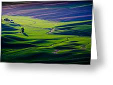 Palouse - Later Afternoon Greeting Card
