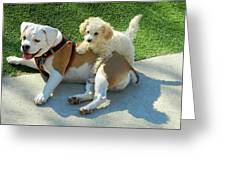 Pals - Linus And Buddy Greeting Card