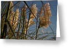 Pampas Grass At Sunset Greeting Card