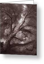 Pams Tree  Two B And W Greeting Card