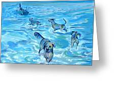 Panama. Salted Dogs Greeting Card
