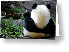 Panda Bear Eating Bamboo Greeting Card