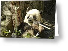 Panda Breakfast Greeting Card