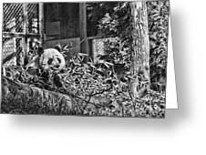 Panda Feast Greeting Card