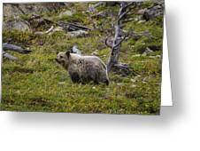 Panda In Many Glacier Greeting Card