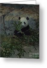 Panda Lunch Greeting Card