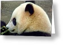 Panda Snack Greeting Card