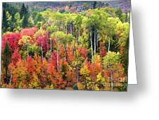 Panoply Of Autumn Color Greeting Card