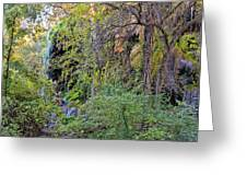 Panorama Of Gorman Falls At Colorado Bend State Park - Lampasas Texas Hill Country Greeting Card