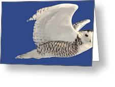 Panoramic Prairie Snowy Owl  Greeting Card