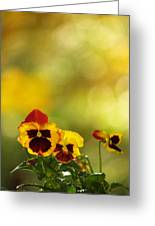 Pansies In The Autumn Glow Greeting Card