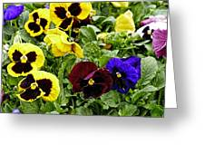 Pansies Of A Different Color Greeting Card
