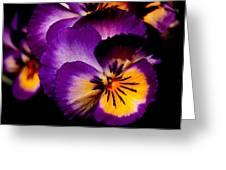 Pansies Greeting Card by Rona Black