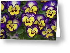 Viola Greeting Card
