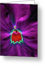 Pansy 03 - Photopower - Thoughts Of You Greeting Card
