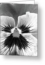 Pansy 06 Bw - Thoughts Of You Greeting Card