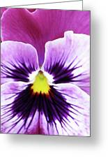 Pansy 07 - Thoughts Of You Greeting Card