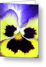 Pansy 09 - Thoughts Of You Greeting Card