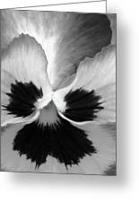 Pansy 10 Bw - Thoughts Of You Greeting Card