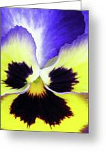Pansy 10 - Thoughts Of You Greeting Card