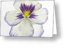 Pansy 2 Greeting Card