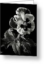 Pansy In Black And White Greeting Card