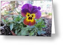 Pansy Perfection Greeting Card