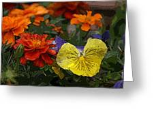 Pansy Play Greeting Card