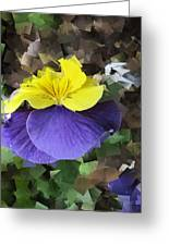 Pansy Squared Greeting Card
