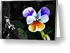 Pansy Statement Greeting Card
