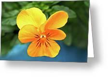 Pansy Greeting Card
