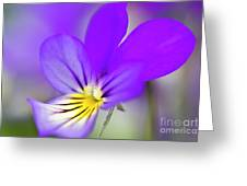 Pansy Violet Greeting Card