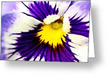 Pansy Violets Greeting Card by Ryan Kelly