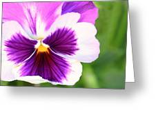 Pansy Wave Greeting Card