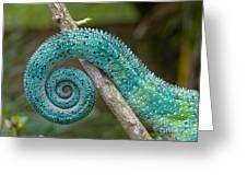 Panther Chameleon Tail Greeting Card