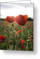 Papaver Rhoeas Greeting Card