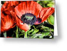 Papaver Greeting Card