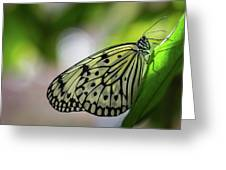 Paper Kite Butterfly- 2 Greeting Card